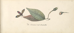 f.9   'The Cinnamon Leaf & Bamboo Fly.'